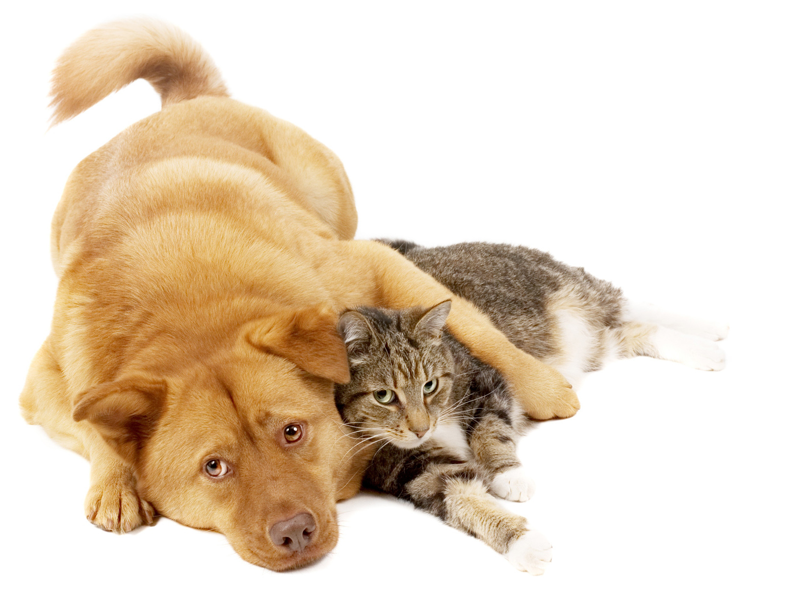 Pet Sitting Services Australia | First Class Pet Sitting